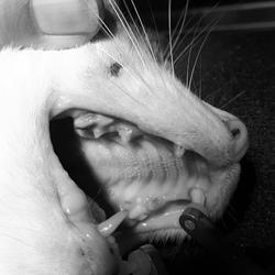 Zahnfistel