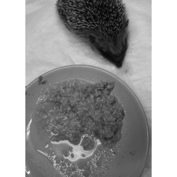 Betreuung von Wildtieren